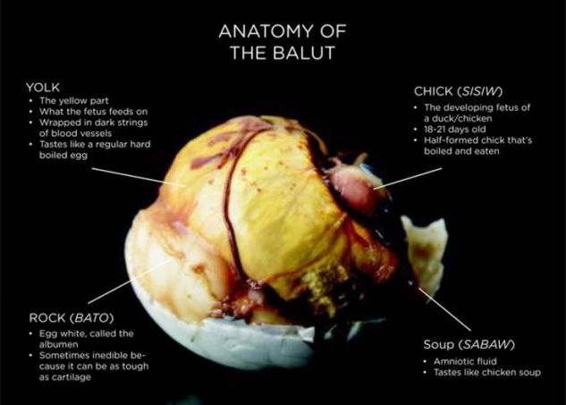 Balut Anatomy